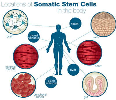 stem cell for skin care