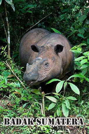 spesies ikan yang hidup bebas di alam Indonesia yang subur yang kalau tidak dilindungi aka 10 HEWAN LANGKA INDONESIA TERANCAM PUNAH