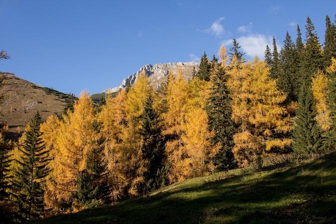Wandern Hochsteiermark | Von der Laufstraße am Präbichl zum Gipfel des Hochturm | Herbstwald