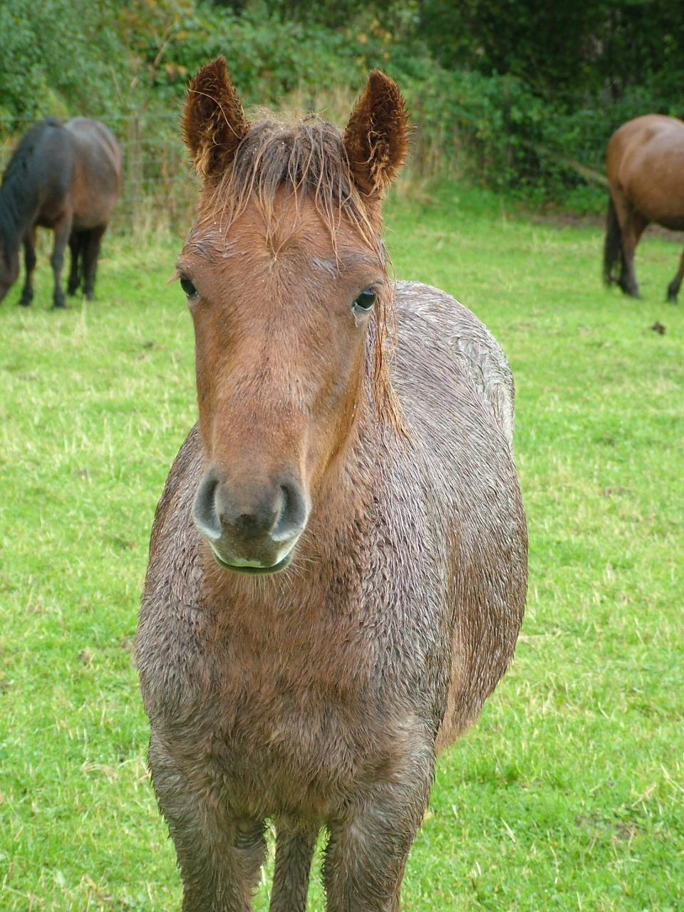 Dartmoor Pony Training Centre - Re-homing Blog - photo#19