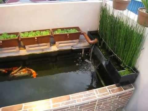 gambar kolam ikan koi sederhana referensi rumah gambar di