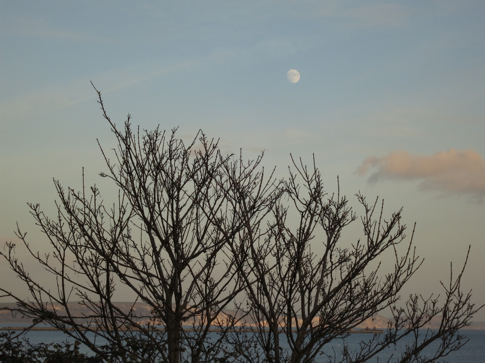 Sycamore and moon - with the cliffs of Purbeck in the distance.