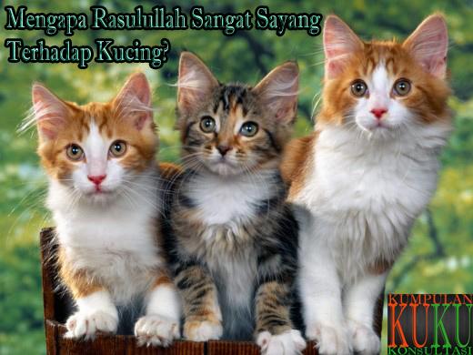 Mengapa Rasulullah Sangat Sayang Terhadap Kucing?