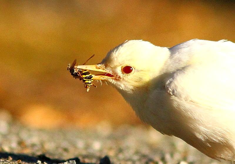 Fuglevennskap