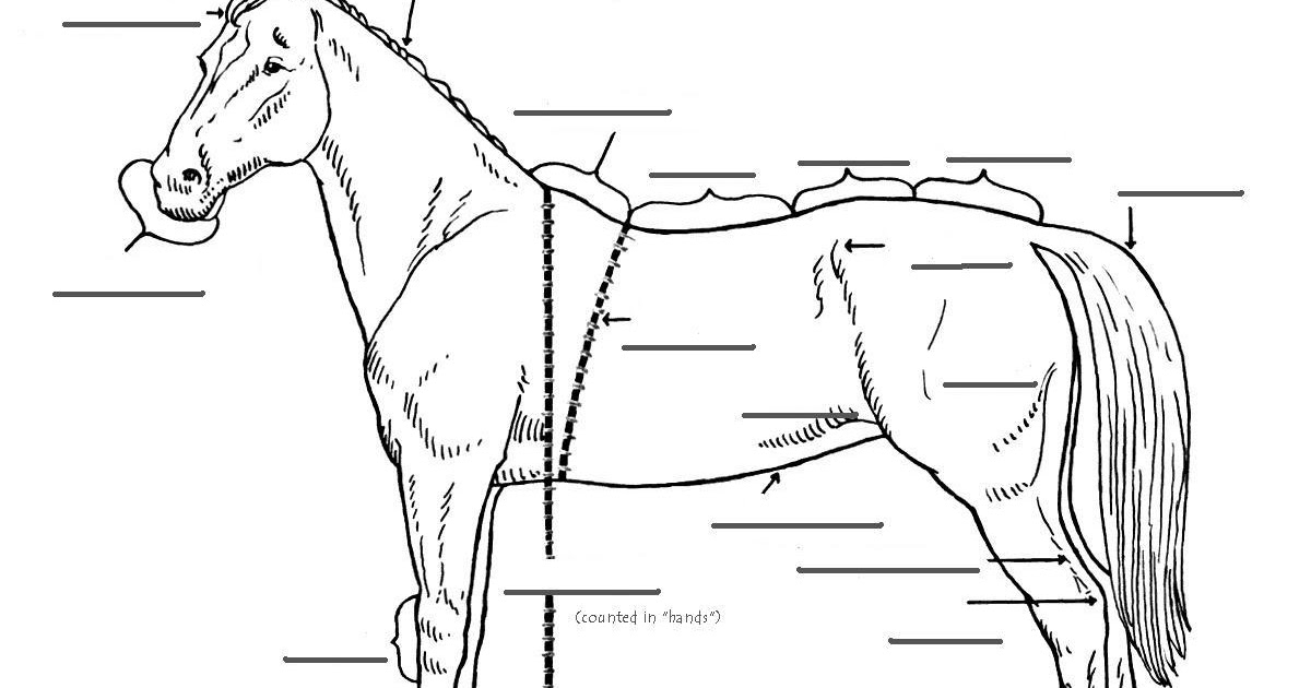 The Mane Point: Can you label the parts of a horse?