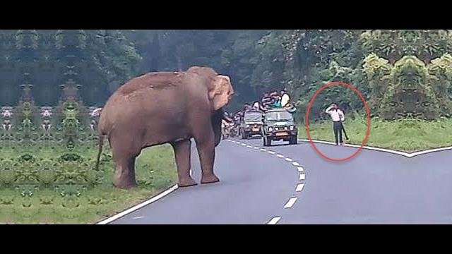 elephant-kills-a-man-in-india
