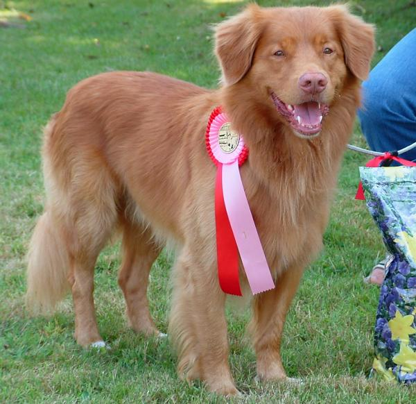 Names for Duck Tollers