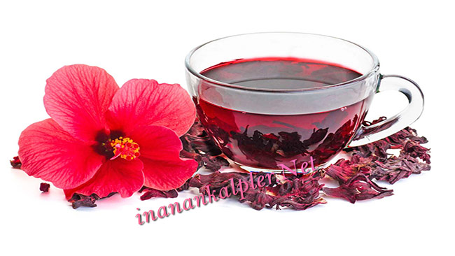 Tansiyonunuzu Hibiskus Çayı İle Düşürün-inanankalpler.net