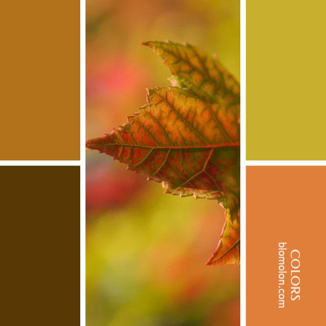 variedad_en_color_combinacion_26