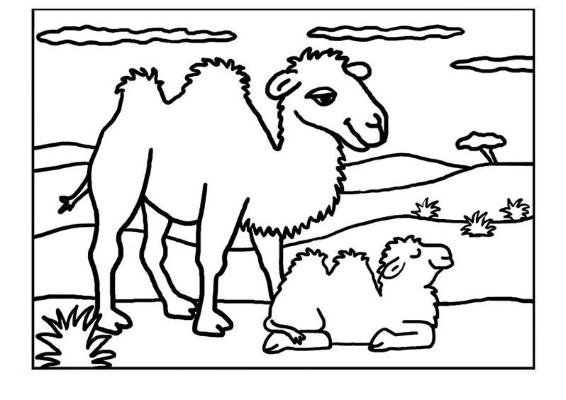 Tranh tô màu gia đình con lạc đà xinh
