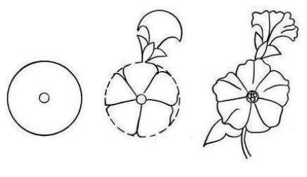 Cara Menggambar Bunga Petunia