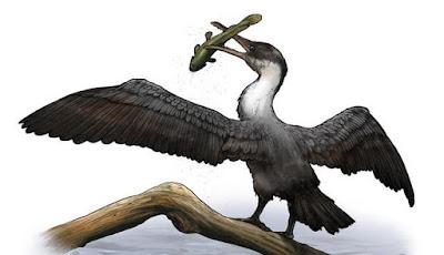 Fosil Burung Prasejarah ditemukan di Kutub Utara