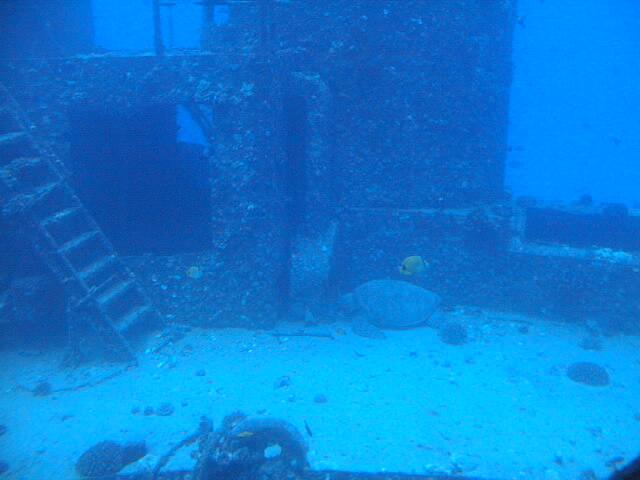Underwater Sunken Ship Pictures - Sex Movies Pron |Sunken Ships Underwater
