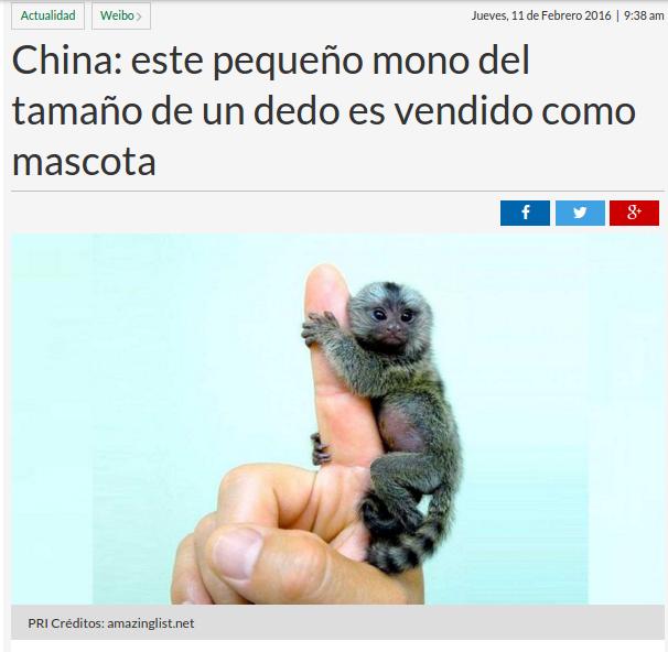 Medidas para medir sin medida: Mono del tamaño de un dedo