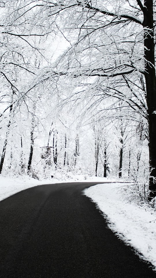 Forest Road Winter Snow  Galaxy Note HD Wallpaper