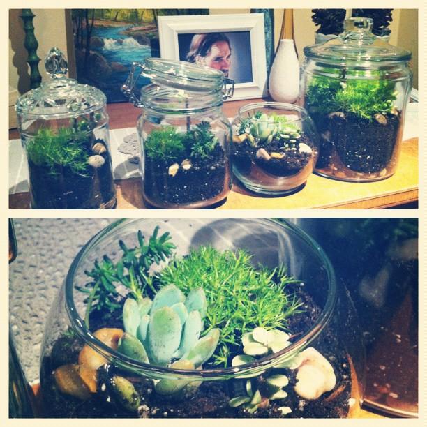 {Oh, So Darling}: DIY: Moss & Mini Succulent Terrarium