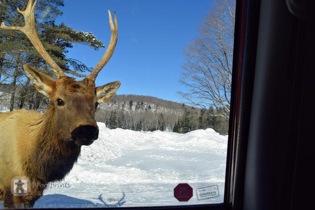 """""""Hello there"""",   werden wir von den Tieren neugierig empfangen"""