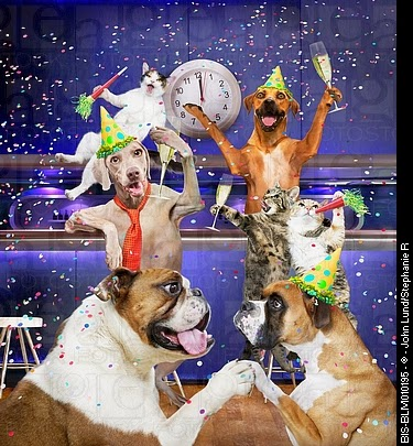Image result for nipclub new years