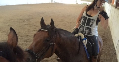 Hunting for my (dressage) Horse: It's a Romy love fest!