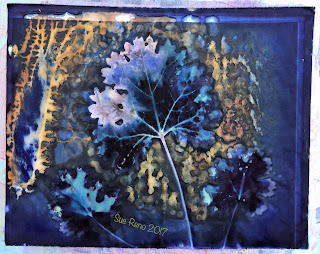 Wet cyanotype, Sue Reno, Image 44