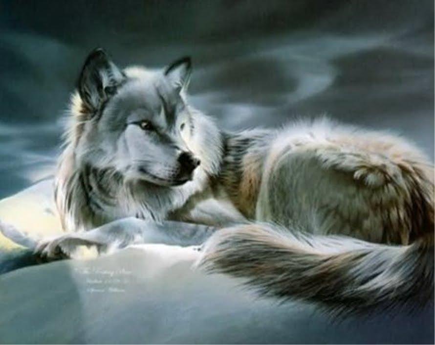 Leopard wolf anime wallpaper - Anime wolf wallpaper ...