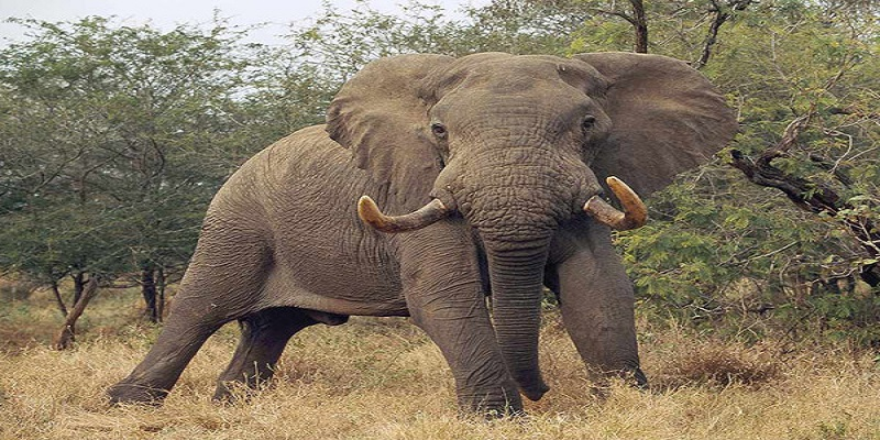 Elefante mata niña
