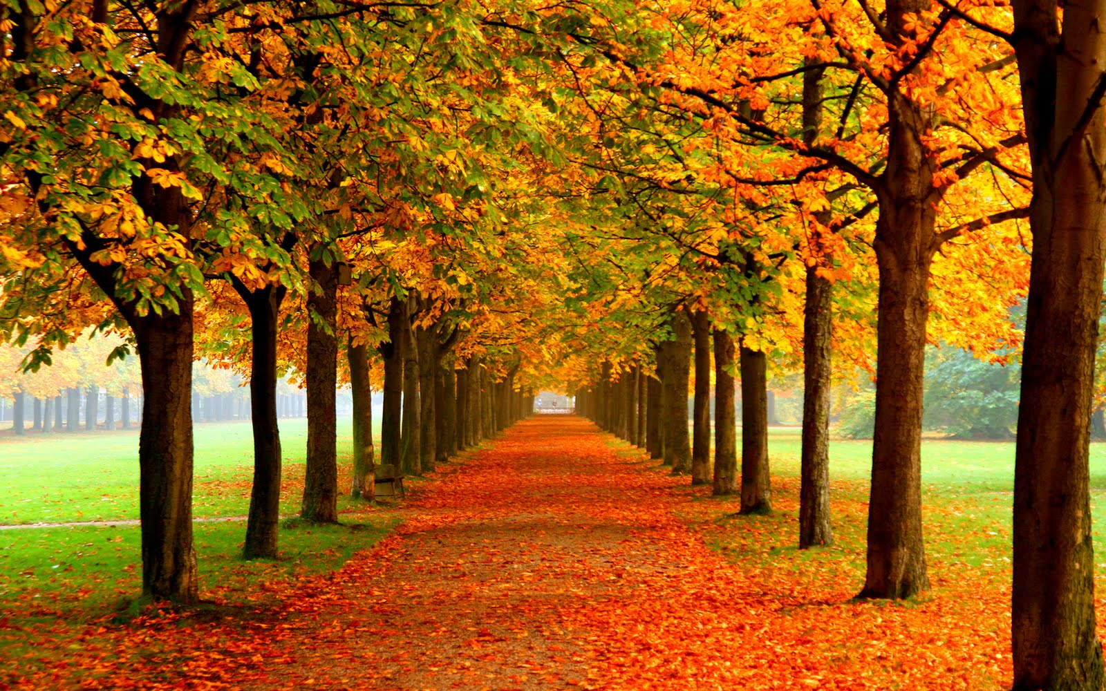 Authum Leaf Widescreen Wallpaper, Nice Background For Your