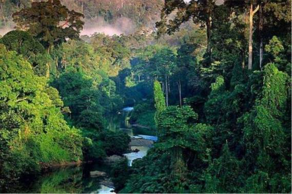 MAKHLUK BUAS PENUNGGU HUTAN AMAZON YANG TERKENAL MENGERIKAN