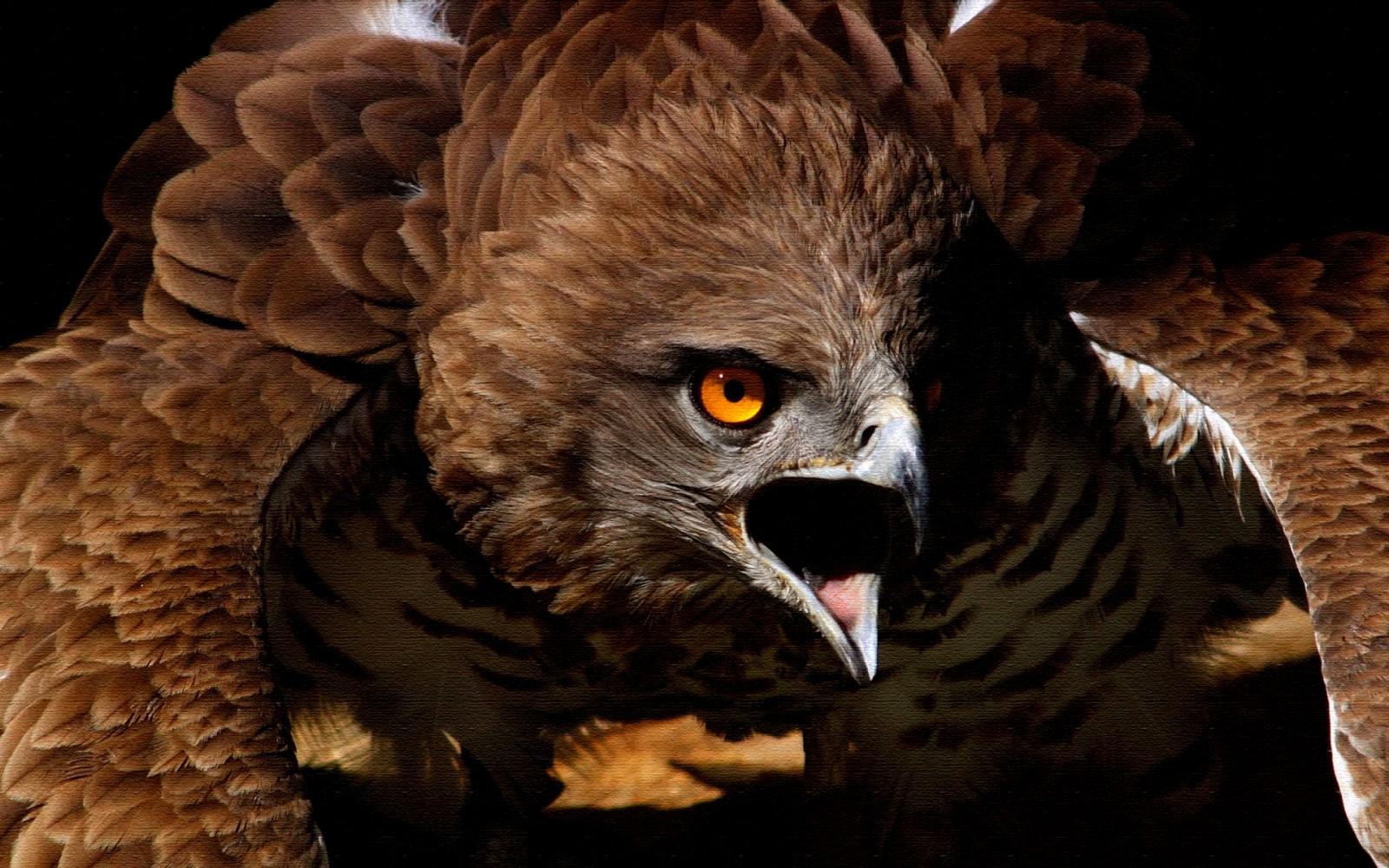 Salman Khan Cute Wallpaper Eagle Birds Wallpapers Entertainment Only