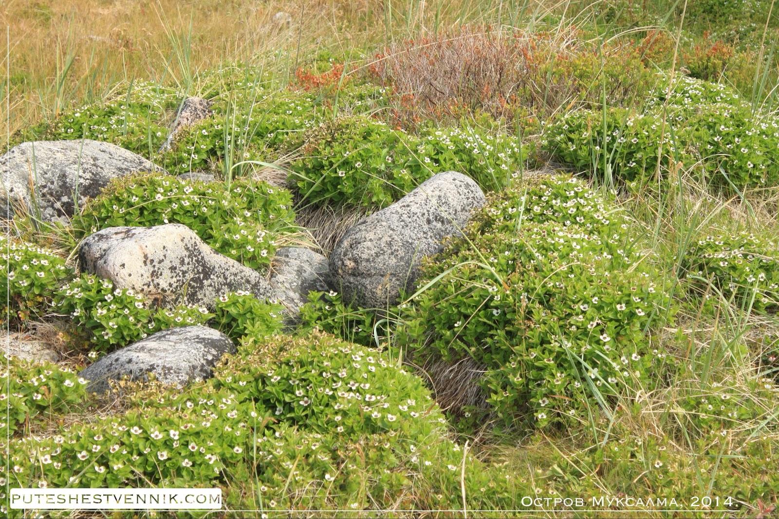 Цветы и камни на поляне