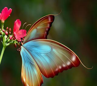 http://www.mediafire.com/view/oa24953u2xkv8a4/big_butterfly.jpg