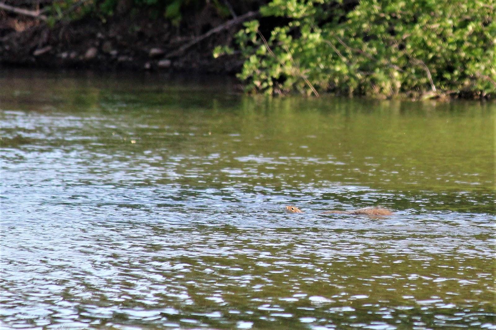 Wny fly fishing wny fly fishing stream report 6 10 2017 for Fly fishing blog