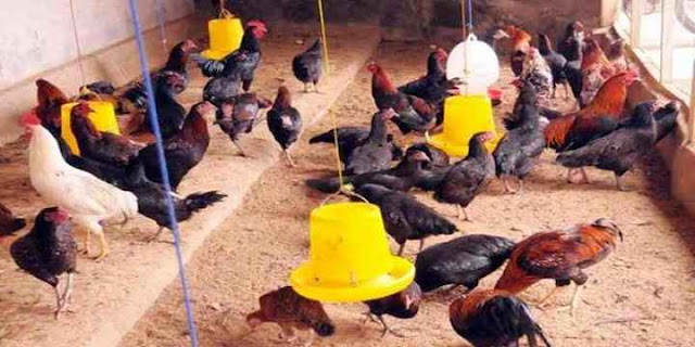 Seorang pria bernama Arman Sitorus memutuskan memanfaatkan lahan sempit di pekarangan rumahnya dengan beternak ayam. Ide ini mulcul karena melihat limbah nasi katering di sekitar tempat tinggalnya yang terbuang percuma dan dimanfaatkanlah oleh Arman biasa ia disapa untuk pakan ayam ternaknya