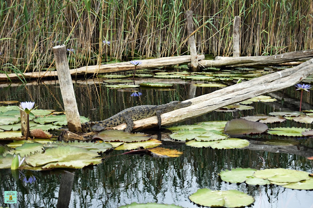 Govuno Wetlands, Mozambique