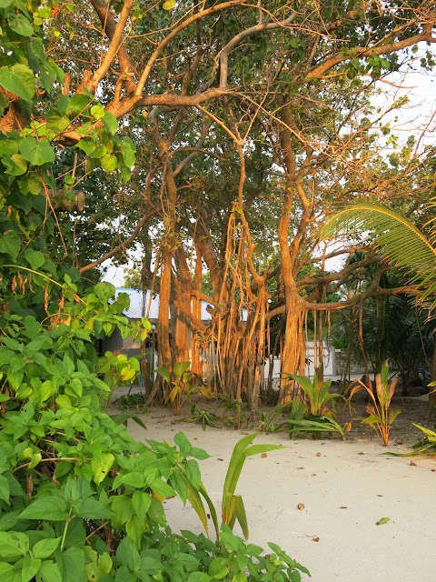 Ön Thoddoo på Maldiverna