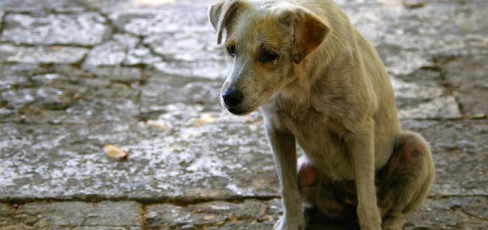 Brindisi: 45 enne picchia senza motivo il proprio cane