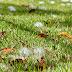 folhas que caem