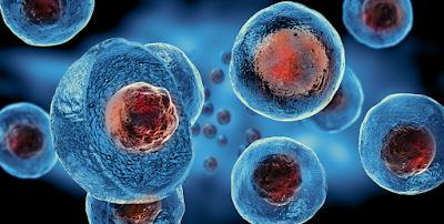 √ Apa Itu Stem Cell ? Penjelasan Stem Cell Adalah Sumber Untuk Sel Baru