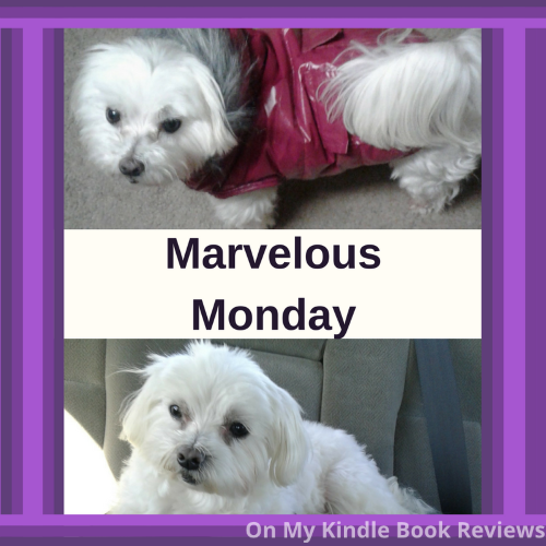 Marvelous Monday, Instagram, #lexithemaltese1