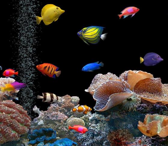 76 Ikan Hias Air Tawar Aquarium Tanpa Oksigen Dan Dengan Oksigen Info Aneka Ikan Hias Air Tawar
