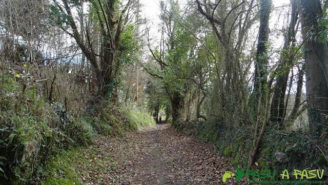 Bosque en Villanueva