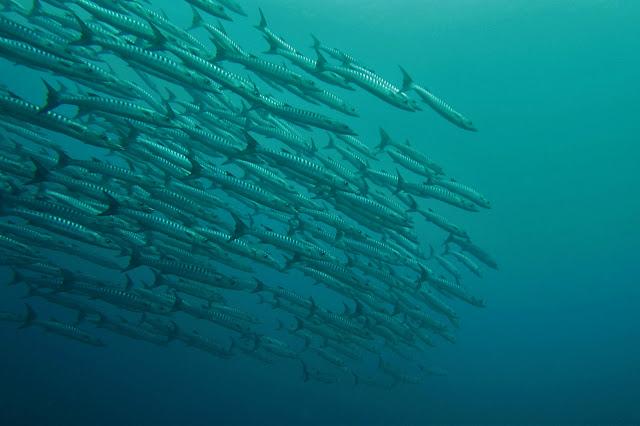 Suuntana Aasia | Sukeltaminen Puerto Princesassa Palawanilla - Scuba Diving in Puerto Princesa, Palawan | Hukkapiilo