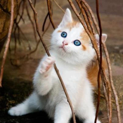 gatito mirada cielo ramas