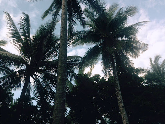 Surrounded with coconut trees will going to the shore