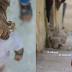 Menina síria que viralizou na Internet perdeu dois irmãos na guerra, mas está a salvo