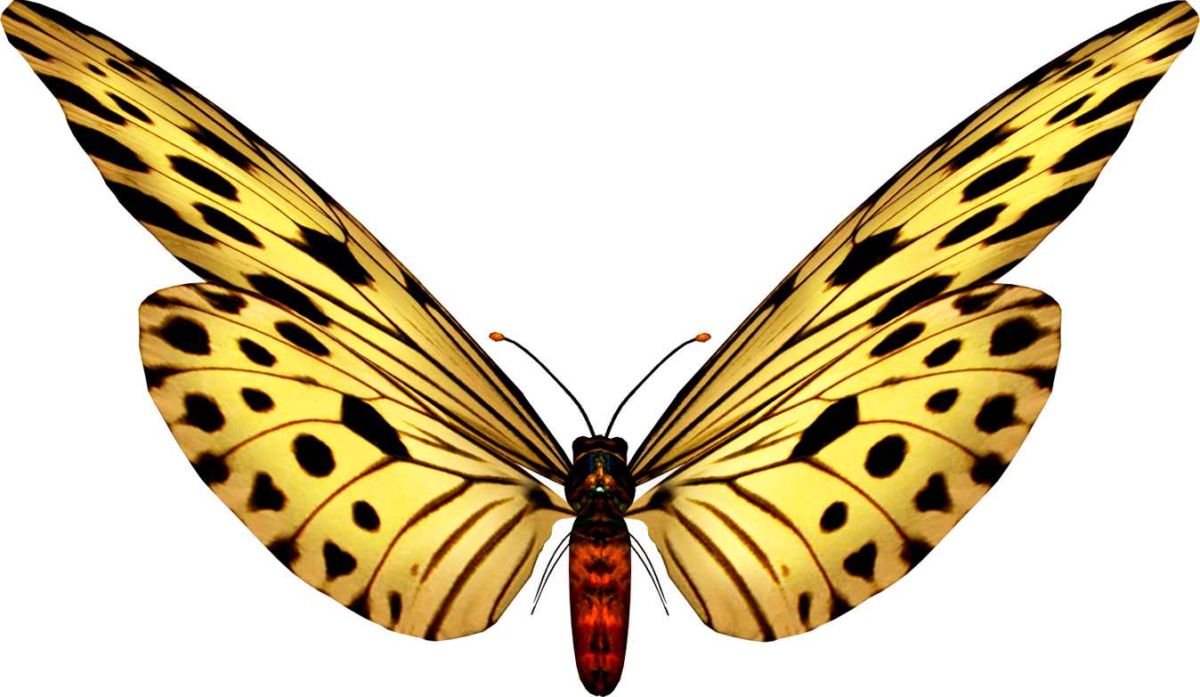 Image Piggiestoons Png: Beautiful Butterfly Images.