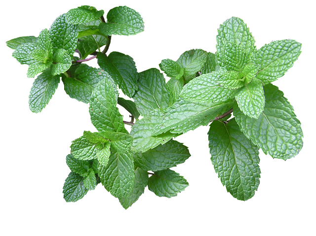 Mint Benefits - 25 Surprising  Health Benefits Of Mint Or Pudina You Must Know 2018