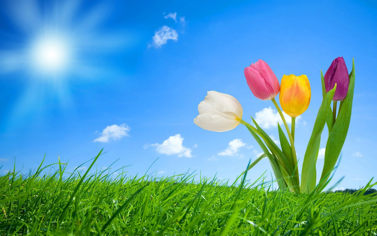 Spring Lente Lente Wallpapers Hd Wallpapers