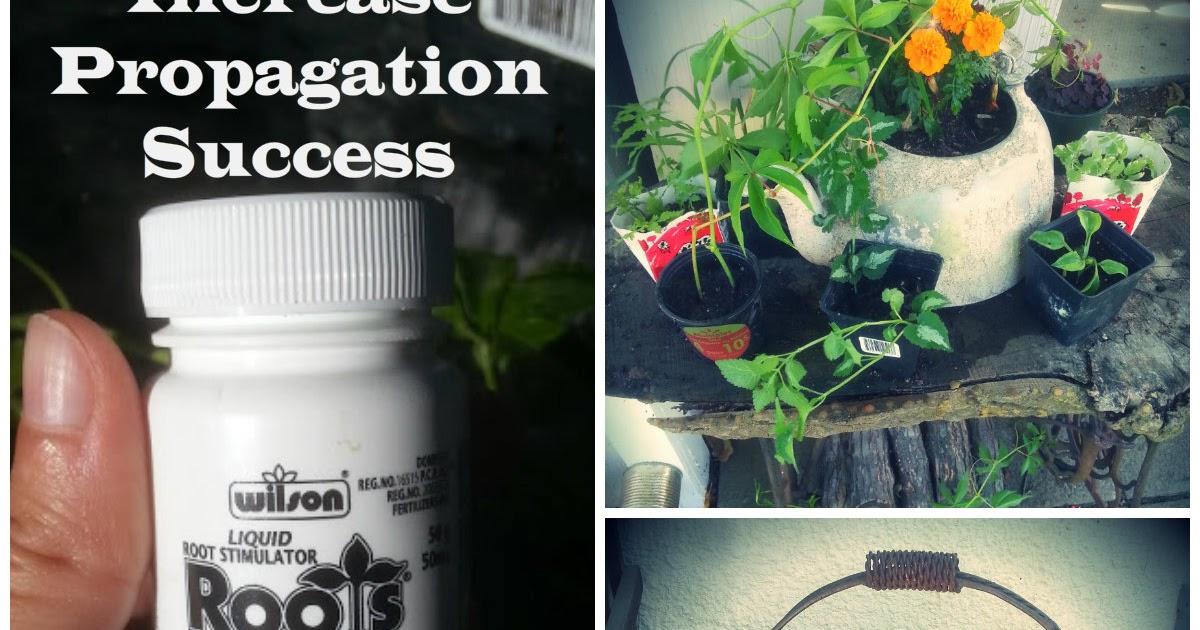 Keen Koala Get Amazing Propagation Success Using Wilson Roots Liquid Root Stimulator