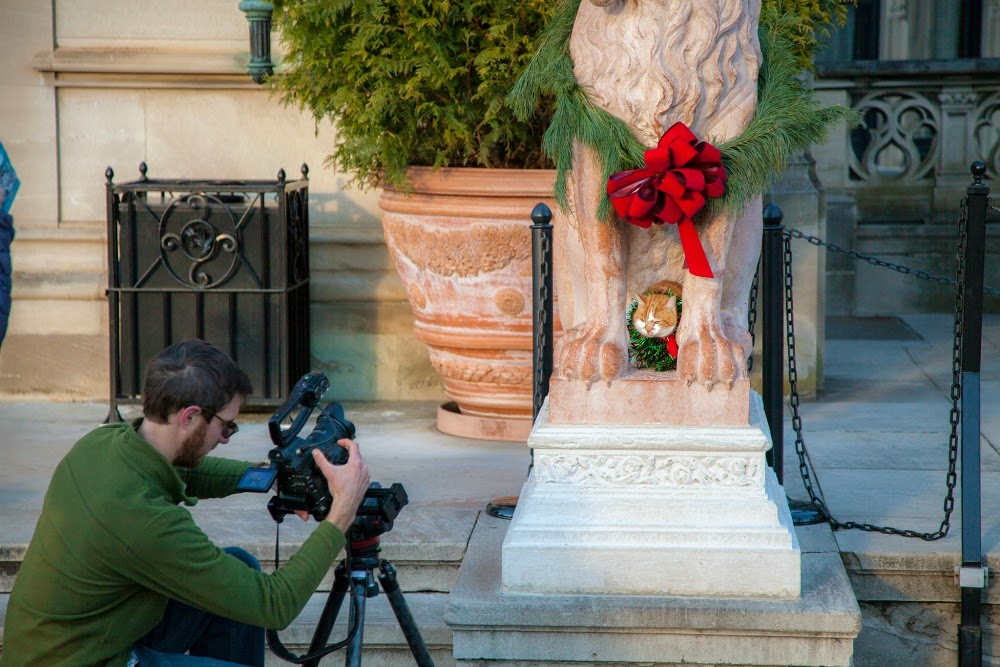 Asheville cat stars for the Christmas video by Explore Asheville.